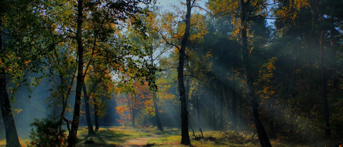 Permalink auf:Jagd ist: Natur erleben